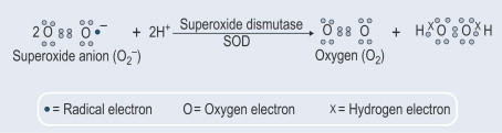 The Best Guide To Superoxide Dismutase